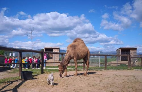 Καμήλα Λεϊλά